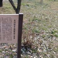 20170319    古河総合公園で桃の花見