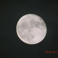 月が今日も綺麗ですよ~っ!