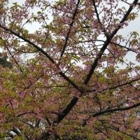 もう散る桜