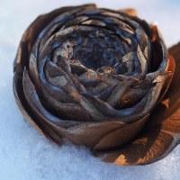 ★ヒマラヤスギの雌花は薔薇の花