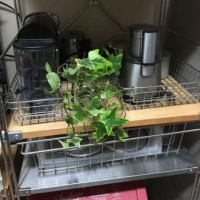 キッチンにグリーン