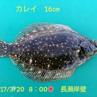 笑転爺の釣行記 4月20日☀ 長瀬・久里浜