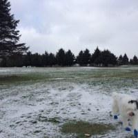 綿雪が降ったり止んだりした金曜日