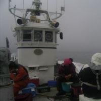 初船釣りに