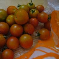 ミニトマト収穫、も。そしてペンギンさんとNIKE