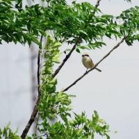 5月の淀川河川敷