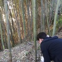 竹林で乙女なる・・・