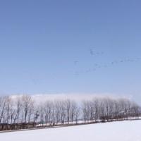 家の沼にも 渡り鳥が来ていた。
