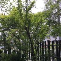 奈良の『くるみの木』でランチ