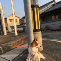 6/23  今日のパピ子といちご