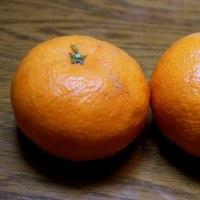 山本柑橘園の柑橘紹介ー5. 西南のひかり