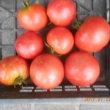 今日の収穫 トマト バジル うまい菜 キュウリ ナス オクラ インゲン シシトウ カボチャ シロウリ