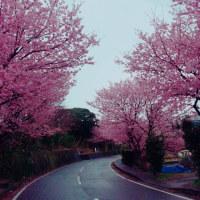 城ヶ崎ブルースとぼら納屋と城ヶ崎桜
