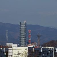 2月20日、浅川の河川敷を歩く~♪