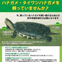 ○環境省○H.28.10 特定外来生物等の新規指定について(ハナガメ・他)