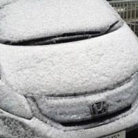 わりと大雪