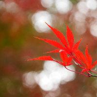 秋です、平林寺です