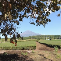 富士山麓の初冠雪