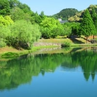 Gifu /Hana Festa ( 9 ) ( 花フェスタ)