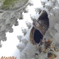 「チョウゲンボウ」の巣立ちに間に合う