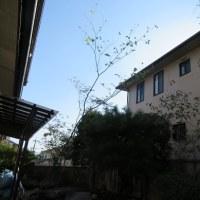 山野草のある庭作り6 植栽