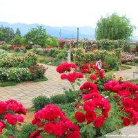 信州・中野 一本木公園のバラ(英国式庭園)
