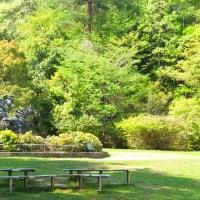 初夏の宝ヶ池散策