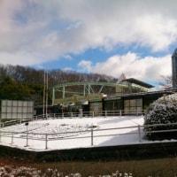 動植物園も真っ白です。