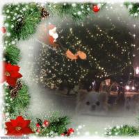 ゆうきと みづきの Christmas Eve of 2016