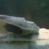 尻尾の切れた魚と水槽メンテナンス