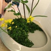 様式本位 写景 中景 アジサイ 菜の花 パセリ