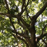 えの木ていでカフェタイム