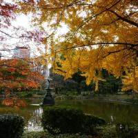 日比谷公園の紅葉と噴水
