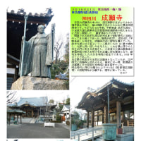 花巡り 「梅-161」 成願寺 神田川
