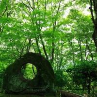 京都の新緑めぐりその3