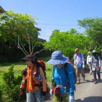 3 神ノ倉山(561m:安佐北区)登山  フジの花を愛でに
