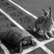 ウサギとカメの話