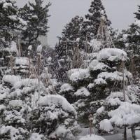 No.1.118 「雪吊り」のお話。