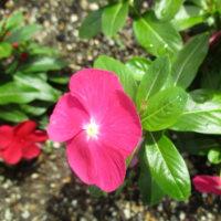 外出先の花と休憩