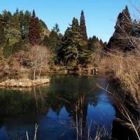 六甲高山植物園冬季特別開園・・オルゴール館付近の池