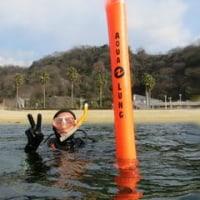 オープンウォーターダイバーコース開催☆ウミウシ増加中!! (広島 ダイビング)
