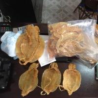 中国需要の海のコカインと呼ばれる魚の浮袋: 魚種消滅の危機