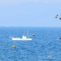 『アオバト』 青い海原