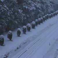 残雪の衣臨5573レ