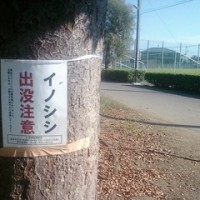2016/10/15 近所にイノシシ出没