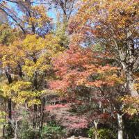 各務野自然遺産の森の紅葉①