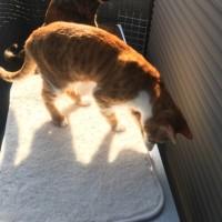 ネコたちのために室外機カバー取付