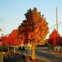 ♡ ♡ 街中にも晩秋の気配が・・・ ♡ ♡