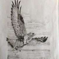 冬の海ひたと見据えむ羽ばたきは逆風にせよみづからのもの
