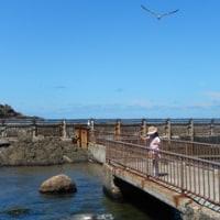 Uちゃんの夏休み―初めての一人旅